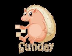 DOTW Sunday - CutePorcupine