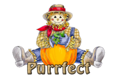 Purrfect - AutumnScarecrowSitting