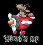 What's up - DogFlyingPlane