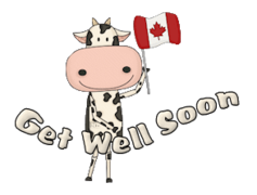 Get Well Soon - CanadaDayCow