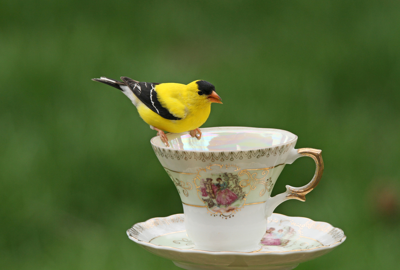 Goldfinch Teacup #7
