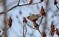 Spring Robin #5
