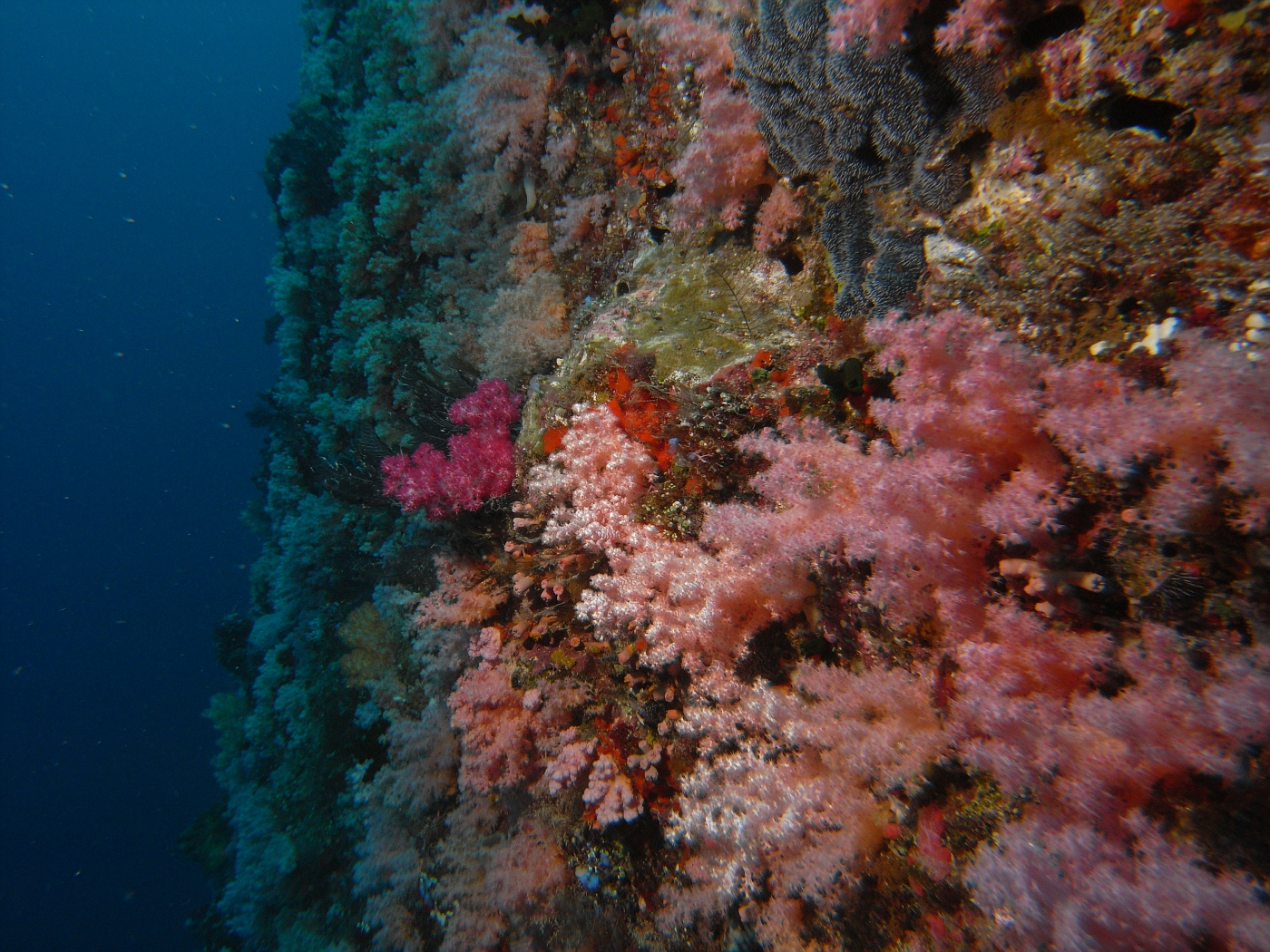 Amazing Soft Coral Filled Wall