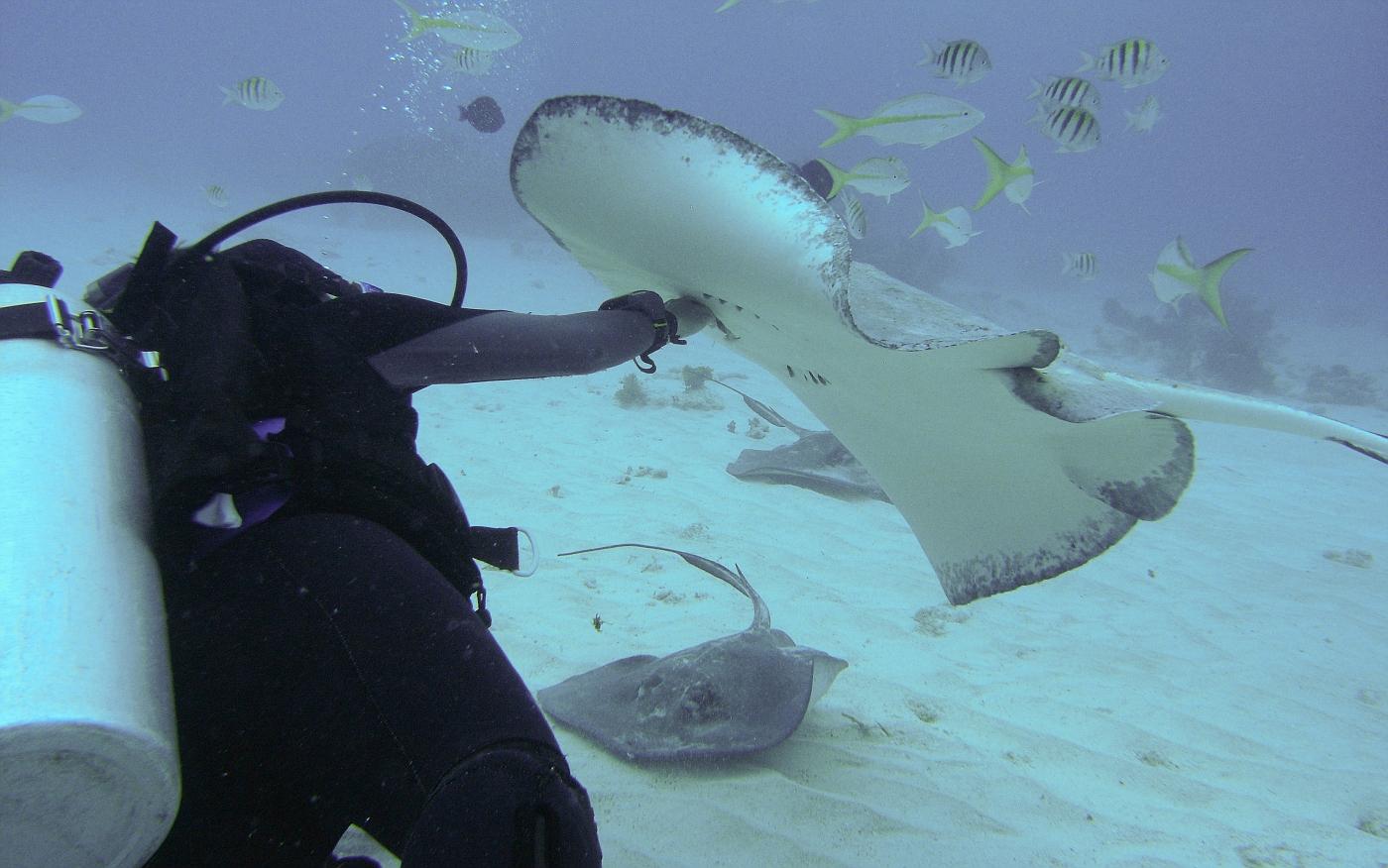 Grand_Cayman-116.jpg