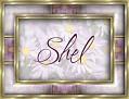 Shel - Daisy