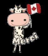 Merci - CanadaDayCow