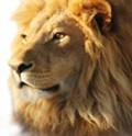 TioLou (TioLou) avatar