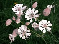 Wildblumen am Wegesrand