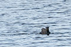 Loch Temescal Monster