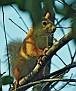 Летняя белка Summer squirrel DSC 4087 016 4 1