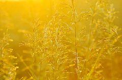DSC9258 b Луга в янтаре Meadows in amber