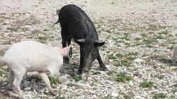 bianco e nero 2010