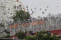 006-delhi birds hospital-img 7762
