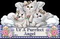 AngelPurrfect-LMG1