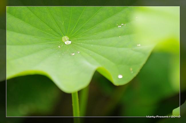 [分享]夏。雨。荷