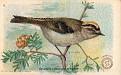1918 Useful Birds of America Second Series #04 (1)