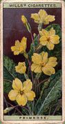 1923 Wills Wild Flowers #30 (1)