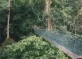 Borneo 002