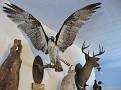 CANAAN VILLAGE - CHARLES H PEASE MUSEUM - 03.jpg