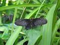 Butterfly World Butterflies Close Up04