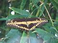 Butterfly World Butterflies Close Up09
