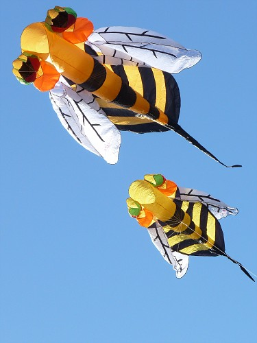 Saturday -- Large and small bees...
