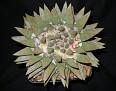 Ariocarpus trigonus