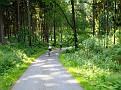 Pessinghauser Wald