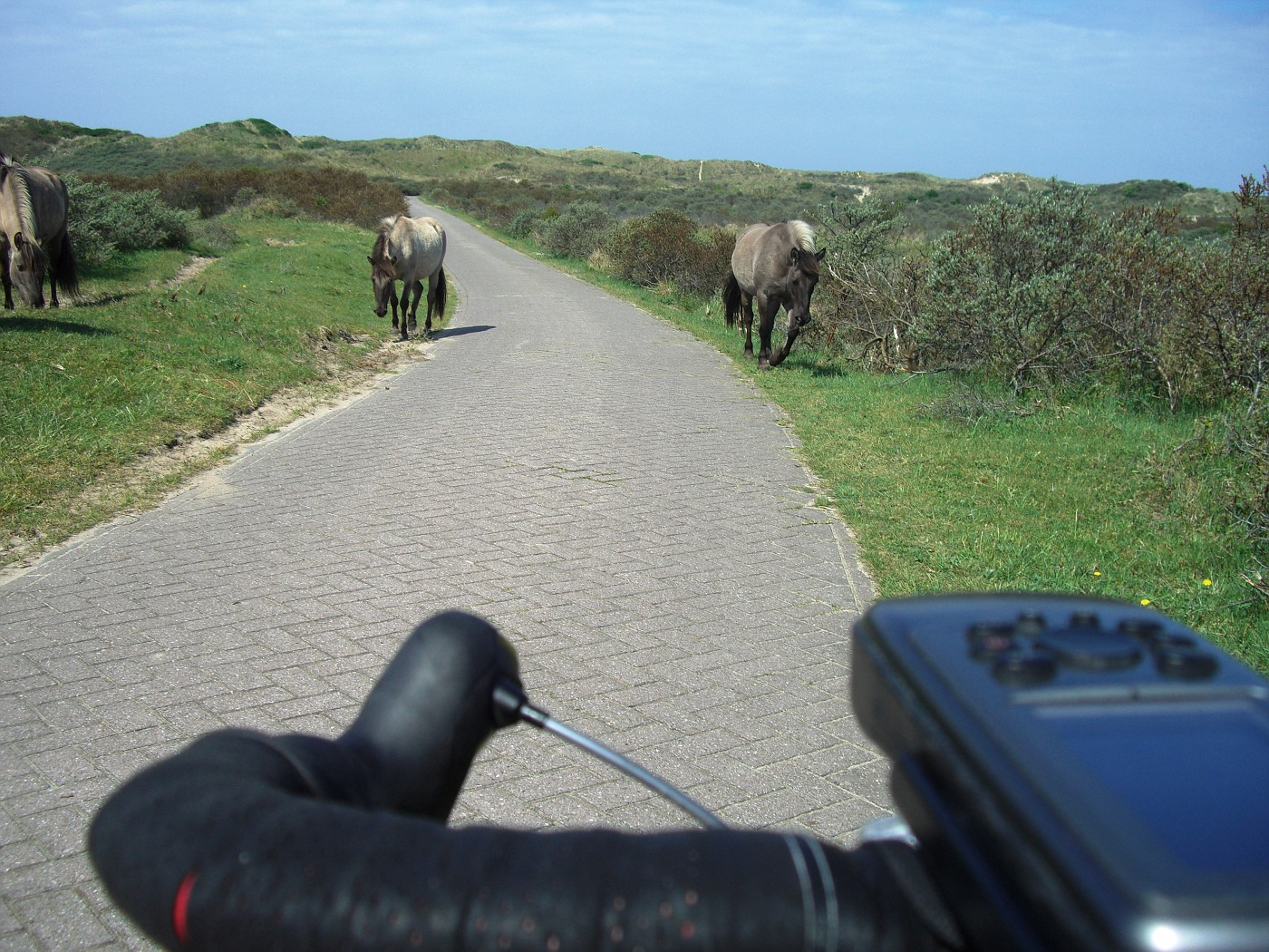 Wild horses at the cycle track
