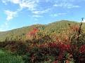 Wilder Wein In Herbstfarbe