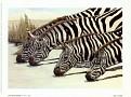 AB71789~Four-Zebras-Drinking-Posters.jpg