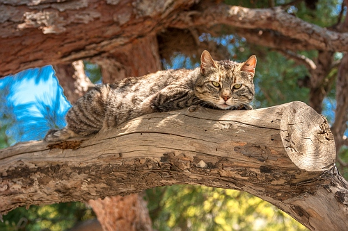 Cats from Panagia Spiliani Monastery