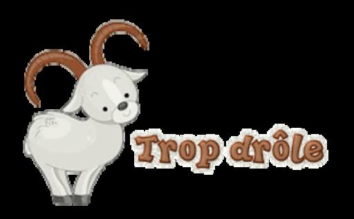 Trop drole - BighornSheep