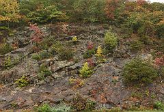 Blueridge Parkway trees and stone