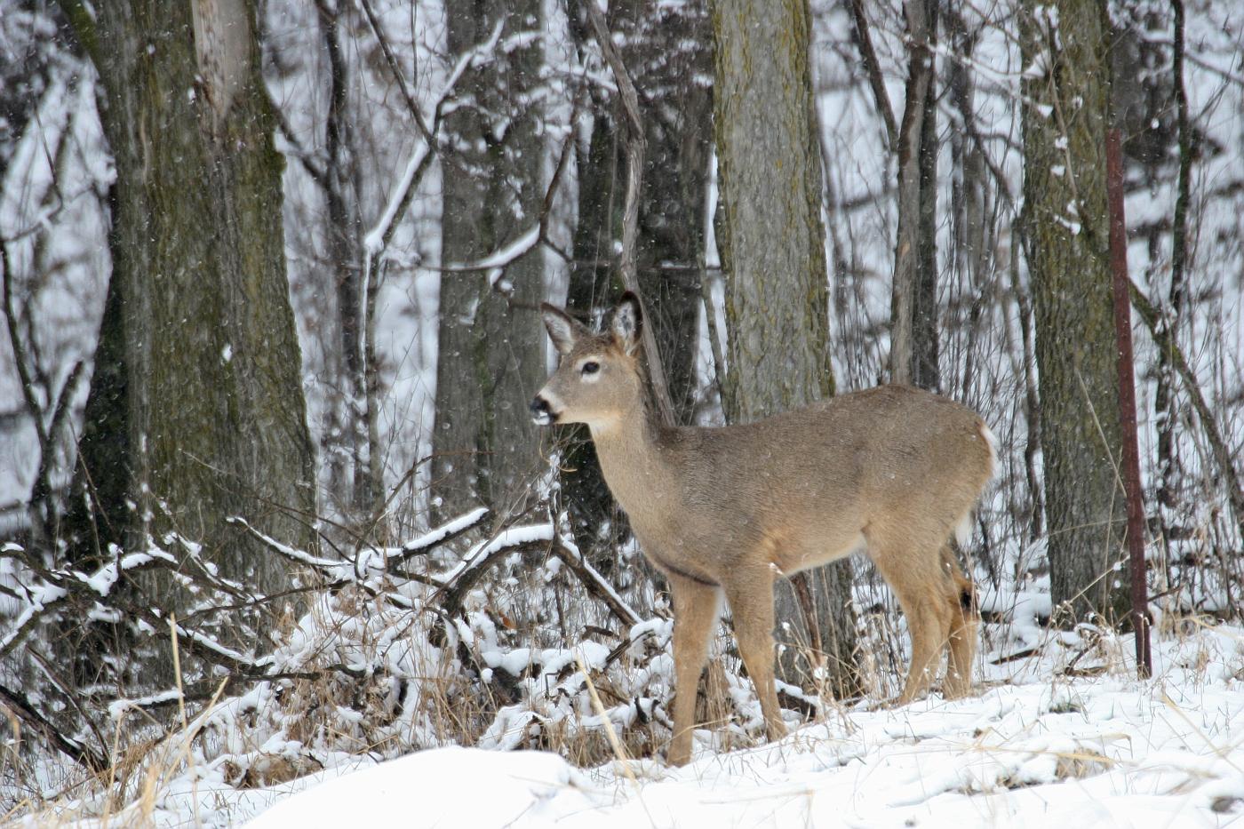 So This Is Spring Deer Series