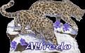 Alfredo Big Cats2