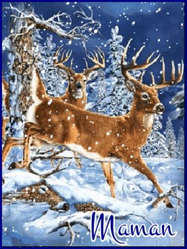 Maman - Deer-Sandra-Jan 16, 2019