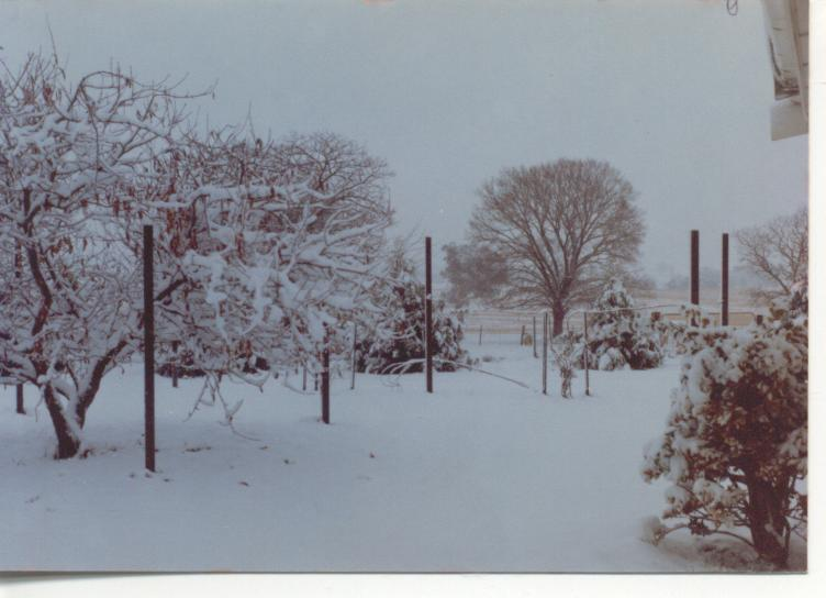 Slight snowfall 4th July 1984 005