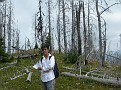 Me and the dead trees