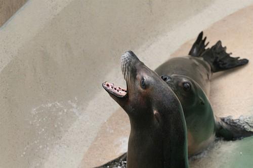 070417 SeaWorld 0032