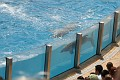 070417 SeaWorld 0083