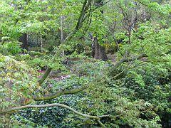 Descano Gardens13