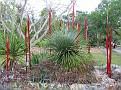 Arid Garden Red and Amber Reeds05