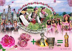 Bulgaria - ROSE NFW