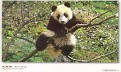 2006 GIANT PANDA SANCTUARIES