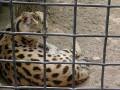 zoo (16)