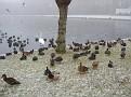 Madestein, Ice the birds do not like ..