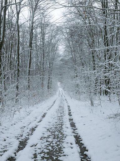 Hansaweg durch Reiner Wald