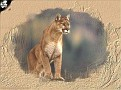 cougar cell 320x240
