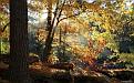autumn-wallpaper-1920x1200-034